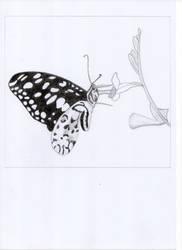 Butterfly by oswin-drawings