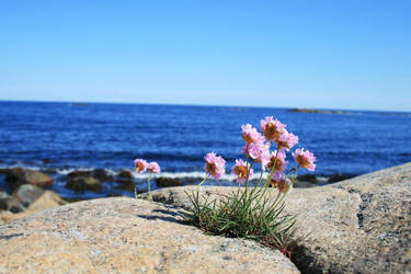 Coastline Flower by mikrei