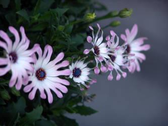 Flowers by Apocalycious