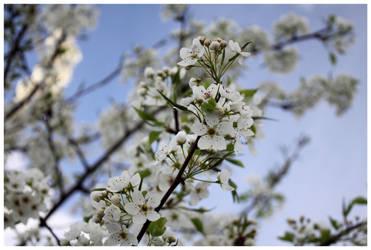 i love spring by MissKris11