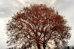 tree by mihmann