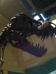 T. rex by CaptainEdwardTeague