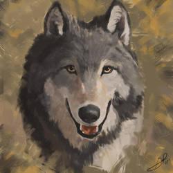 Wolf Study by GarrettPack