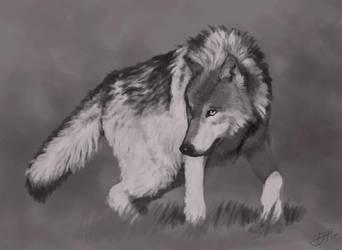 Wolf Study 090617 by GarrettPack