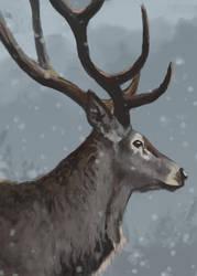 DeerStudy Nov17 by GarrettPack