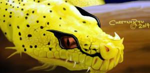 CheetahRyu's Profile Picture