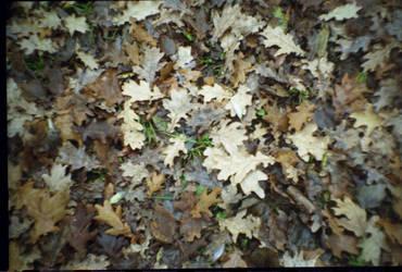 .oaken bed. film texture by missAlienation-stock