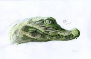 Baby Crocodile by matsmoebius