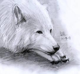 Wolf by matsmoebius