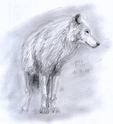 Another Wolf by matsmoebius