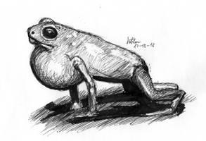 Posion Dart Frog by matsmoebius