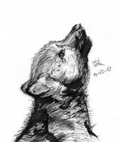 Wolf puppy by matsmoebius