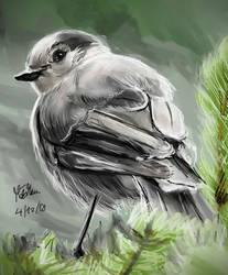 Another bird by matsmoebius