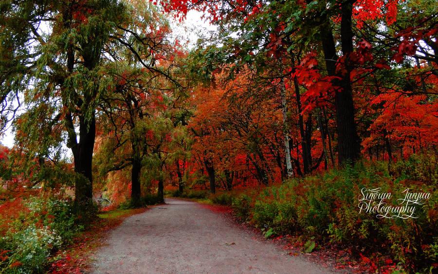 Autumn by Janjua