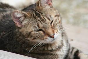 Kitty Smiles by Dellessanna