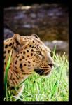 This isn't my cat_XD_BL by Leox90
