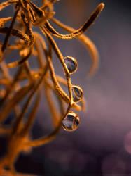 Autumn tears. by SheilaMBrinson