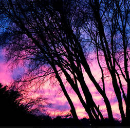 The Pretty Colors of Nature by SheilaMBrinson