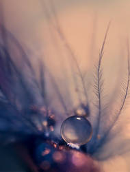Peafowl by SheilaMBrinson