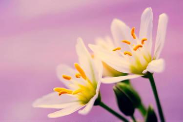 Spring by SheilaMBrinson