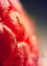 Raspberry Hair by SheilaMBrinson