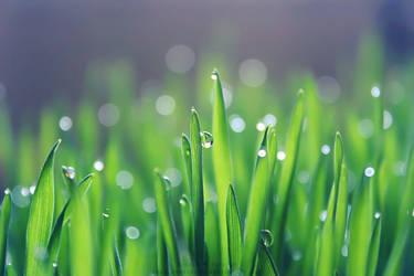 Wheat Grass by SheilaMBrinson