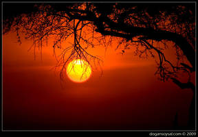 SUN FRUIT by dogansoysal
