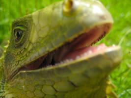 Iguana Bite by TonitoDePR