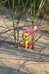 Fluttershy Hiding on the Dunes by AquilaTEagle
