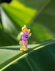 Jelly Bee: Comment Contest - Guess Where by AquilaTEagle