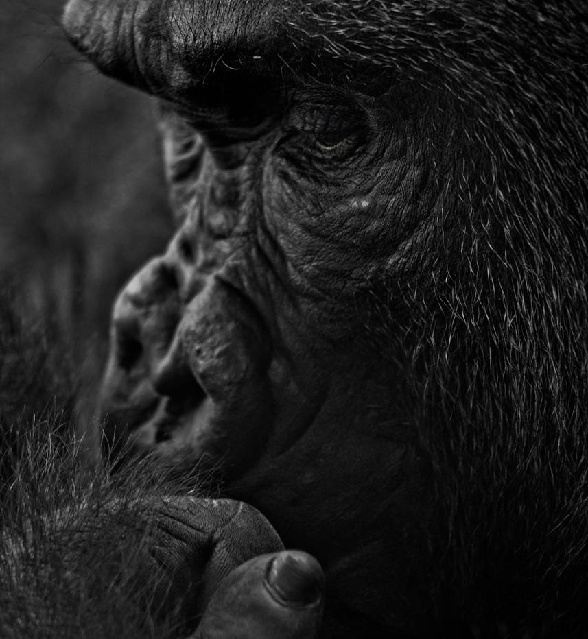 Deep Thinker by Blind-EyePhotography