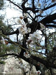Plum Blossoms Nijojo I by BaroqueBobcat