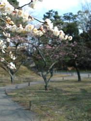 Plum Blossoms Nijojo IV by BaroqueBobcat