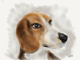 Beagle by digitalchet