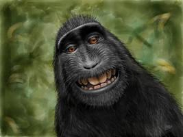 Macaca Nigra (Black Crested Macaque) by digitalchet
