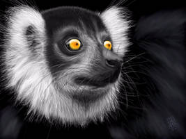 Black Lemur by digitalchet