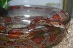Snake by emBBu-93