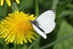 Butterfly by emBBu-93