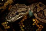 Snakes by emBBu-93