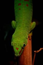 Lizard by emBBu-93