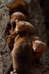 Mongoose by emBBu-93