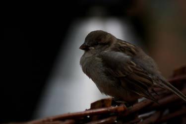 Birdie by emBBu-93