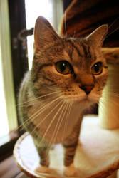 Cat by emBBu-93
