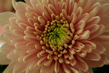 Flower by emBBu-93