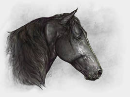 Lusitano 1 by howlinghorse