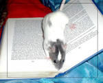 Rat-on-book by howlinghorse