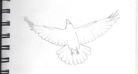 Crow/Raven by MyrddinDerwydd
