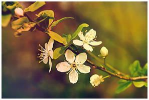 Spring XII by cristiandobre