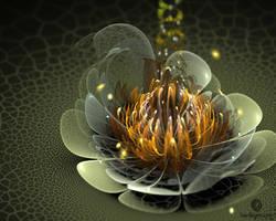Tender Lotus by f--l--A--r--k