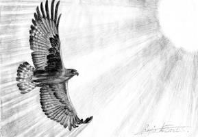 Eagle Fly Free by lapis-lazuri